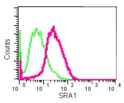 Flow Cytometry - Anti-SRAP antibody [EPR11776] (ab183725)
