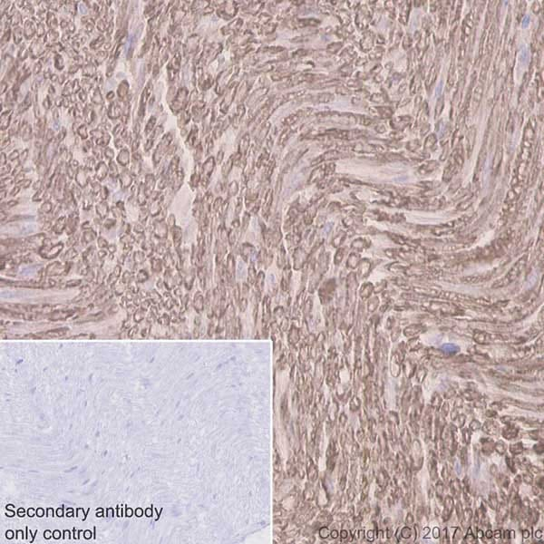 Immunohistochemistry (Formalin/PFA-fixed paraffin-embedded sections) - Anti-Myelin Protein Zero antibody [EPR20383] (ab183868)