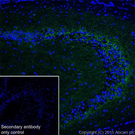 Immunohistochemistry (Frozen sections) - Anti-GAD65 + GAD67 antibody [EPR19366] (ab183999)
