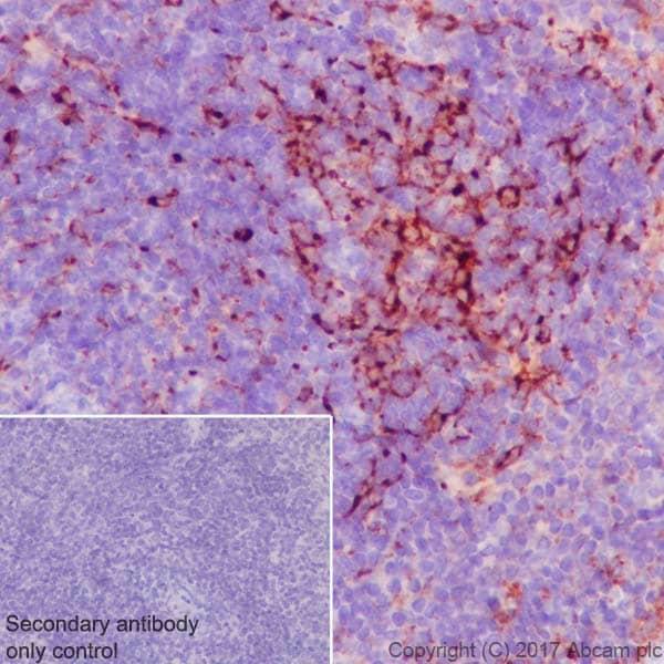 Immunohistochemistry (Formalin/PFA-fixed paraffin-embedded sections) - Anti-Clusterin alpha chain antibody [EPR17539-95] (ab184100)