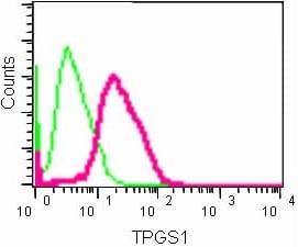 Flow Cytometry - Anti-TPGS1 antibody [EPR14324] (ab184178)