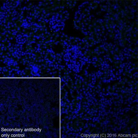 Immunohistochemistry (Frozen sections) - Anti-MAP1A antibody [EPR18993] (ab184349)