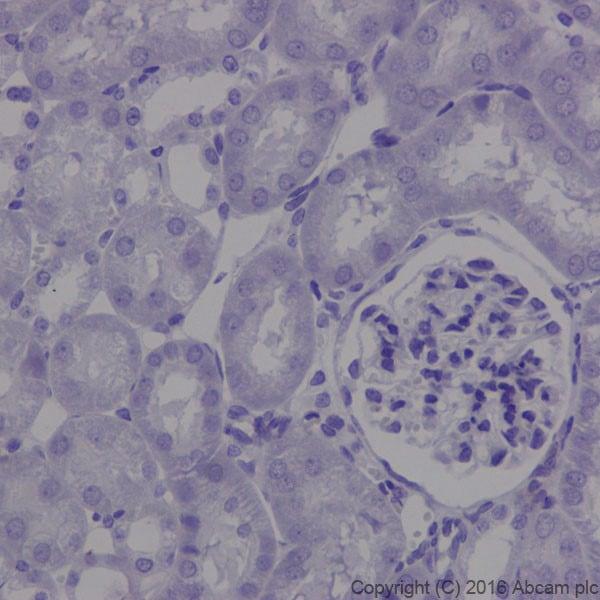 Immunohistochemistry (Formalin/PFA-fixed paraffin-embedded sections) - Anti-MAP1A antibody [EPR18993] (ab184349)