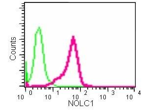 Flow Cytometry - Anti-NOLC1 antibody [EPR14896] (ab184550)