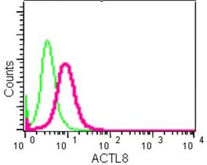 Flow Cytometry - Anti-ACTL8 antibody [EPR13912] (ab184562)