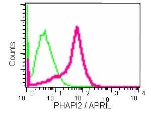 Flow Cytometry - Anti-PHAPI2 / APRIL antibody [EPR14589] (ab184565)