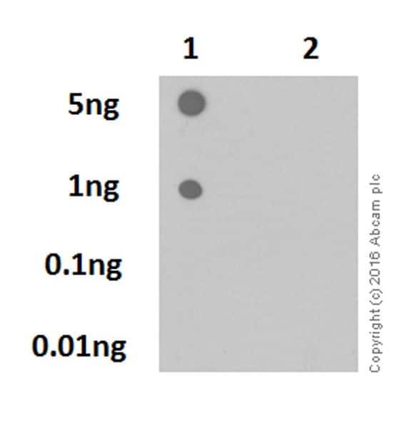 Dot Blot - Anti-Rb (phospho S780) antibody [EPR17624] (ab184702)