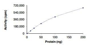 Functional Studies - Recombinant human AMPK alpha 2 + AMPK beta 1 +AMPK gamma 3 protein (ab184881)
