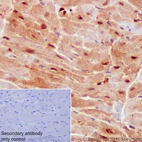Immunohistochemistry (Formalin/PFA-fixed paraffin-embedded sections) - Anti-ATF5 antibody [EPR18286] (ab184923)
