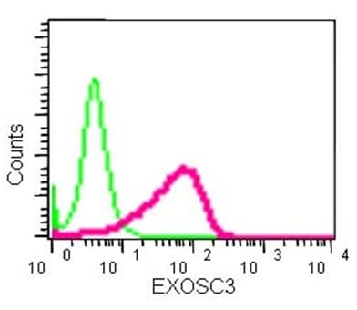 Flow Cytometry - Anti-EXOSC3 antibody [EPR14840(B)] - N-terminal (ab184961)