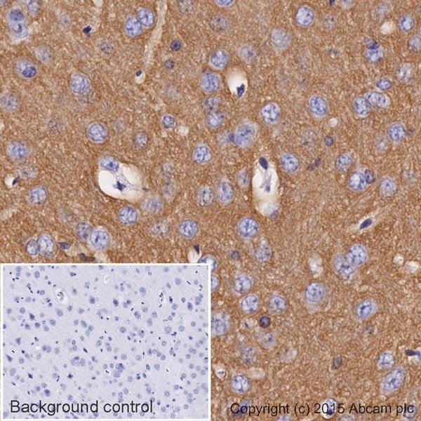 Immunohistochemistry (Formalin/PFA-fixed paraffin-embedded sections) - Anti-Sodium Potassium ATPase antibody [EP1845Y] - Plasma Membrane Loading Control (HRP) (ab185065)