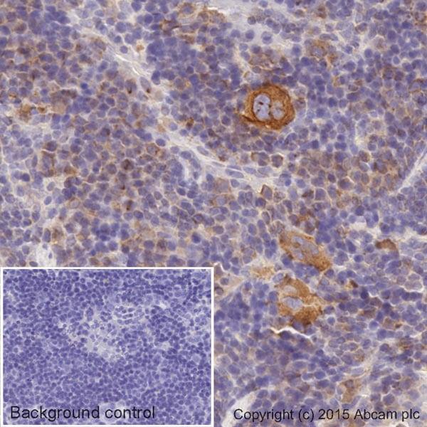 Immunohistochemistry (Formalin/PFA-fixed paraffin-embedded sections) - HRP Anti-alpha Tubulin antibody [EPR13478(B)] - Loading Control (ab185067)