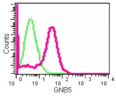 Flow Cytometry - Anti-Gbeta5 antibody [EPR14778] (ab185206)