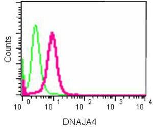 Flow Cytometry - Anti-DNAJA4 antibody [EPR8756] (ab185553)