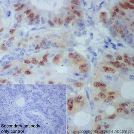 Immunohistochemistry (Formalin/PFA-fixed paraffin-embedded sections) - Anti-Cyclin A1 + Cyclin A2 antibody [EPR18054] (ab185619)