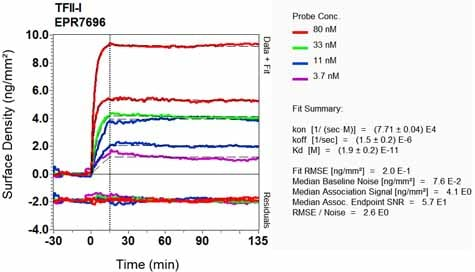 Other - Anti-TFII I antibody [EPR7696] - BSA and Azide free (ab185640)