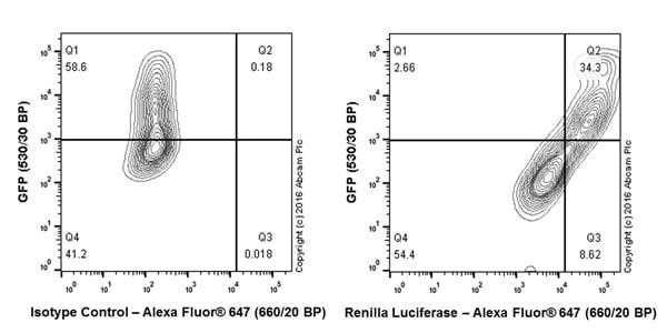 Flow Cytometry - Anti-Renilla Luciferase antibody [EPR17792] (ab185926)