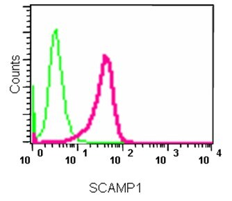 Flow Cytometry - Anti-SCAMP1 antibody [EPR14493(B)] (ab185951)