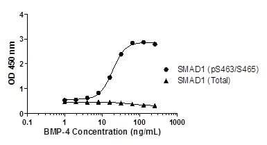 SMAD1 (pS463/S465) phosphorylation in response to BMP-4 treatment.