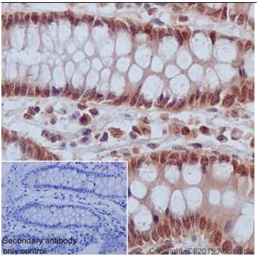 Immunohistochemistry (Formalin/PFA-fixed paraffin-embedded sections) - Anti-IRF1 antibody [EPR18301] (ab186384)