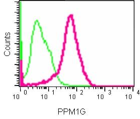 Flow Cytometry - Anti-PPM1G antibody [EPR13362-31] (ab186423)