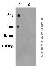 Dot Blot - Anti-NAK/TBK1 (phospho S172) antibody [EPR2867(2)] - BSA and Azide free (ab186469)