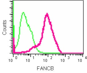 Flow Cytometry - Anti-FANCB antibody [EPR15513] (ab186729)