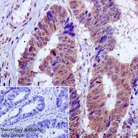 Immunohistochemistry (Formalin/PFA-fixed paraffin-embedded sections) - Anti-MCL1 antibody [Y37] - BSA and Azide free (ab186822)