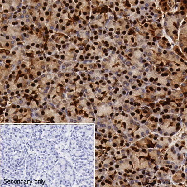 Immunohistochemistry (Formalin/PFA-fixed paraffin-embedded sections) - Anti-GAPDH antibody [EPR6256] - BSA and Azide free (ab186930)