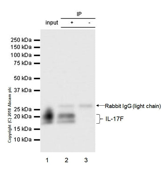 Immunoprecipitation - Anti-IL-17F antibody [EPR17830-169] (ab187059)