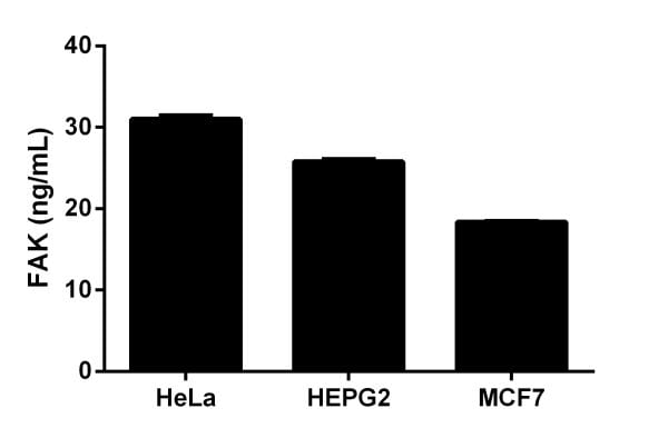 Quantitation of FAK in different cell lines