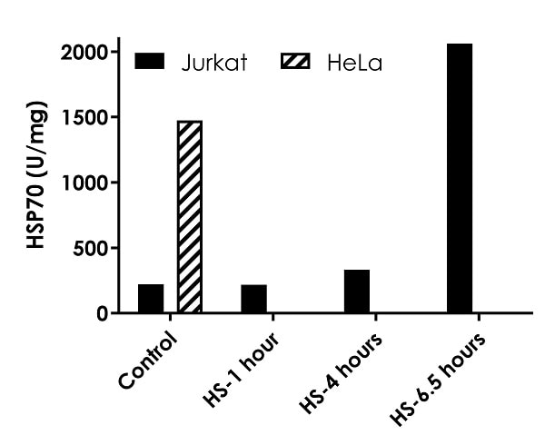HSP70 concentrations in un-induced and heat shock induced cells
