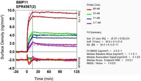 Other - Anti-GDF11 + GDF8/Myostatin antibody [EPR4567(2)] - BSA and Azide free (ab187407)