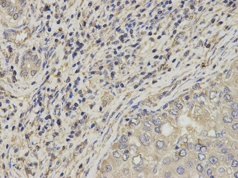 Immunohistochemistry (Formalin/PFA-fixed paraffin-embedded sections) - Anti-SLC4A4/NBC antibody (ab187511)