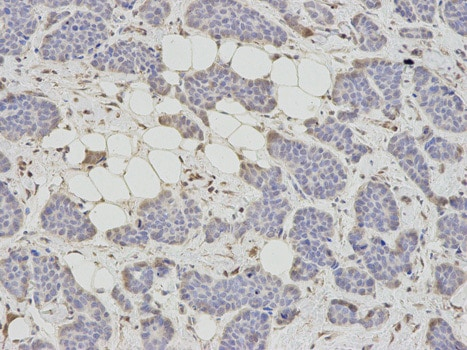Immunohistochemistry (Formalin/PFA-fixed paraffin-embedded sections) - Anti-SAHH antibody (ab187518)