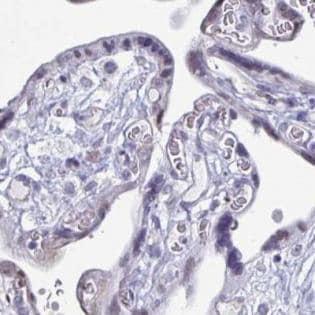 Immunohistochemistry (Formalin/PFA-fixed paraffin-embedded sections) - Anti-TMEM122 antibody (ab187749)