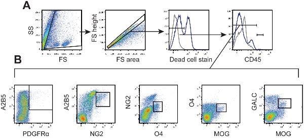 Flow Cytometry - FITC Conjugation Kit (Fast)- Lightning-Link