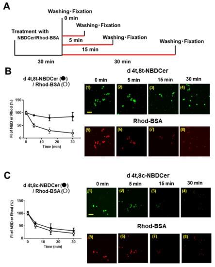 Fluorescence Microscopy - Rhodamine Conjugation Kit (Fast)- Lightning-Link® (ab188286)