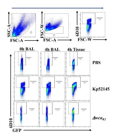 Flow Cytometry - Rhodamine Conjugation Kit (Fast)- Lightning-Link® (ab188286)