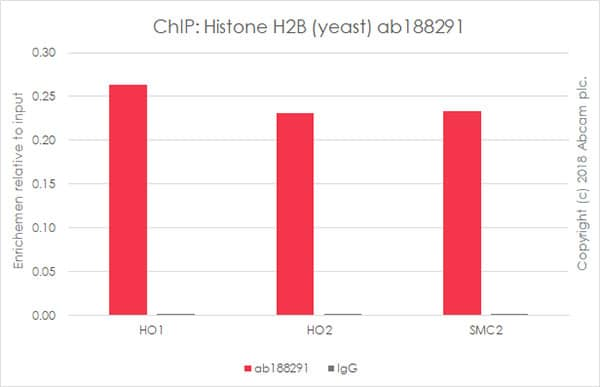 ChIP - Anti-Histone H2B (yeast) antibody [EPR18094] - ChIP Grade (ab188291)