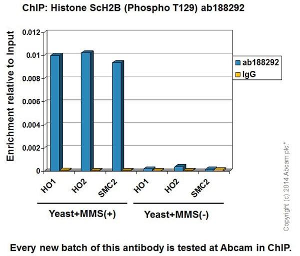 ChIP - Anti-Histone H2B (phospho T129) antibody [EPR18095] - ChIP Grade (ab188292)