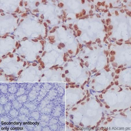 Immunohistochemistry (Formalin/PFA-fixed paraffin-embedded sections) - Anti-Histone H2A.Z antibody [EPR18090] - ChIP Grade (ab188314)