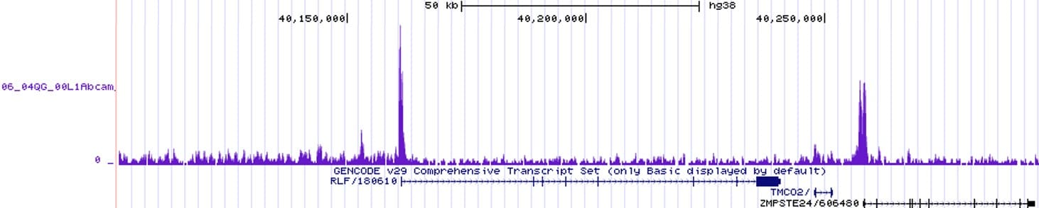 ChIP-sequencing - Anti-Histone H2A.Z antibody [EPR18090] - ChIP Grade (ab188314)