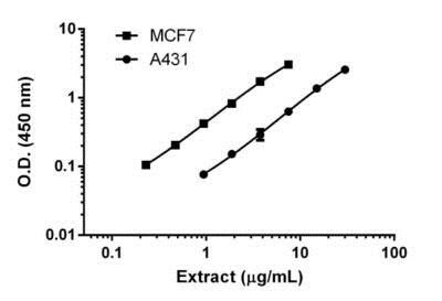 Titration of A431 and MCF7 extracts within the working range of the assay