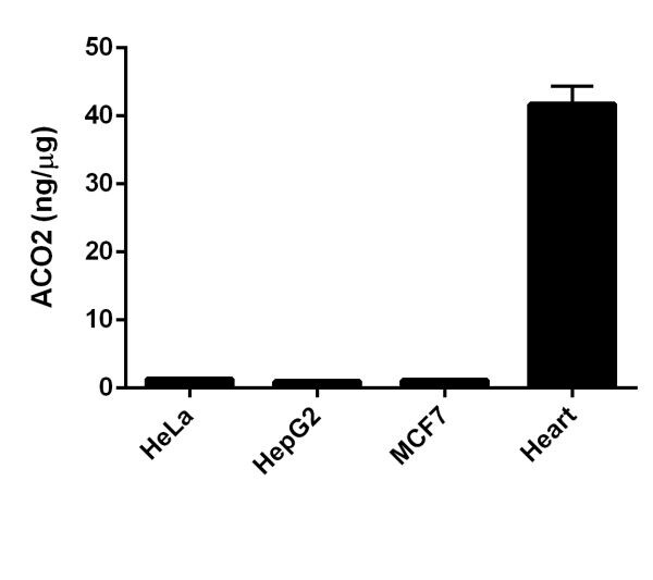Aconitase 2 concentrations in Human cell and tissue samples.