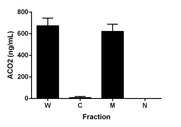 Distribution of Aconitase 2 in cytosolic, mitochondrial and nuclear fractions of HeLa cells.