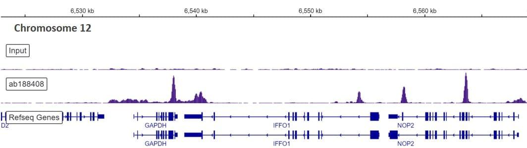 ChIP-sequencing - Anti-CTCF antibody [EPR18253] - ChIP Grade (ab188408)