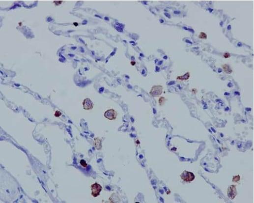 Immunohistochemistry (Formalin/PFA-fixed paraffin-embedded sections) - Anti-MCEMP1 antibody [EPR14393] - C-terminal (ab188572)