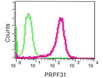 Flow Cytometry - Anti-PRPF31 antibody [EPR14587] (ab188577)