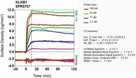 OI-RD Scanning - Anti-Plasma Kallikrein 1B antibody [EPR5707] - BSA and Azide free (ab188827)